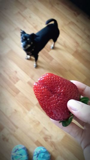 Strawberry Dog Luna I Need Summer