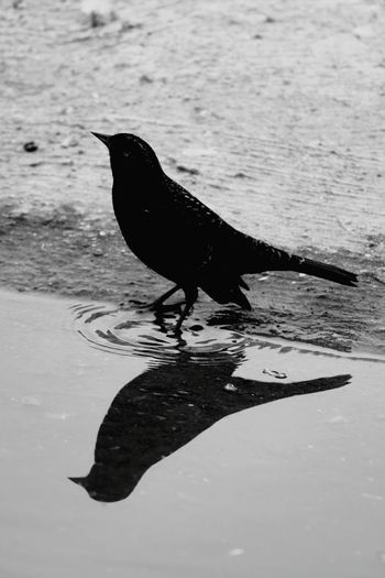 Canon 70d EyeEm The Best Shots My Unique Style Water Reflections Nature_collection Moment Lens Bird 75 -300mm Black & White