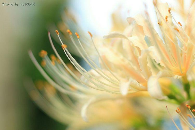 つけまつける~🎶🎶 Enjoying Life Flowers 彼岸花 曼殊沙華 EyeEm Nature Lover Nature_collection EyeEm Flower Streamzoofamily