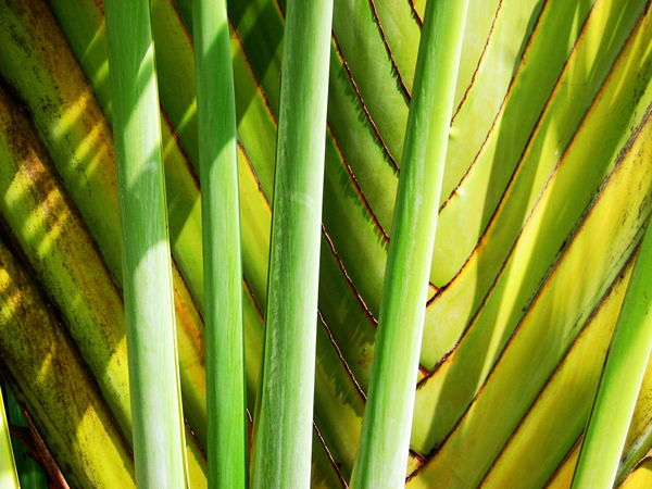 2007 Dominican Republic Dominicus Beach Beauty In Nature Close-up Day Freshness Full Frame Green Color Growth Nature No People Outdoors Palm Tree Plant