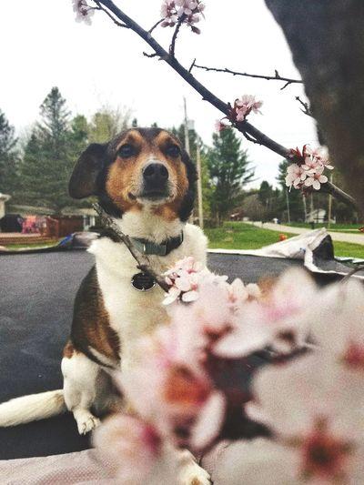 Tree Pets