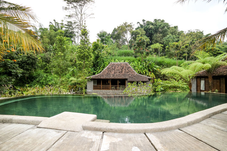 Kampung Lumbung, Malang Indonesia Kampung Architecture Beauty In Nature Building Building Exterior Built Structure Cottage Day Green Color Growth House Kampunglumbung Lumbung Nature No People Outdoors Plant Pool Reflection Sky Swimming Pool Tranquil Scene Tranquility Tree Water