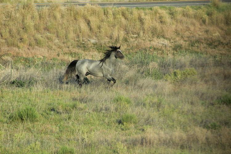 Grass Animal