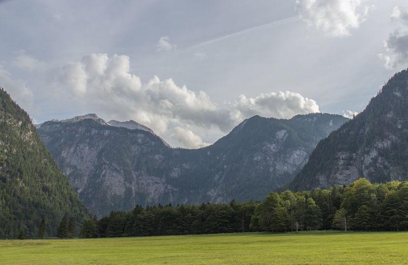 Alpen Bäume