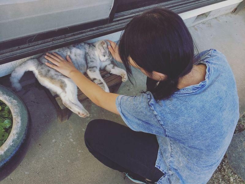 好きな人 と 猫