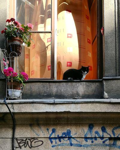 The Street Photographer - 2017 EyeEm Awards Window Day Morning Laziness City First Eyeem Photo