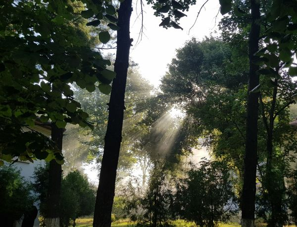 No Edit, No Filter, Just Photography Tree Tree Trunk Branch Sunshine ☀ Tree Area Green Color Nature Beauty In Nature Freshness Sky Smoke Leaves🌿 Green Grass 🌱 Scenics Vegetation EyeEmNewHere EyeEm Best Shots