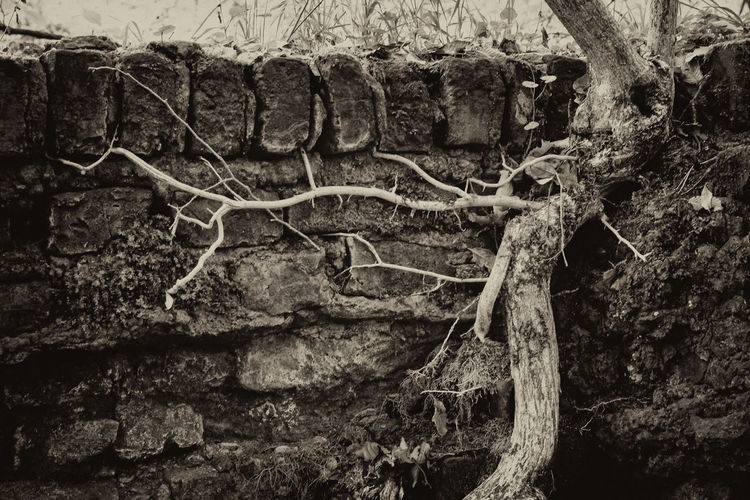 Close-up of tree trunk against wall