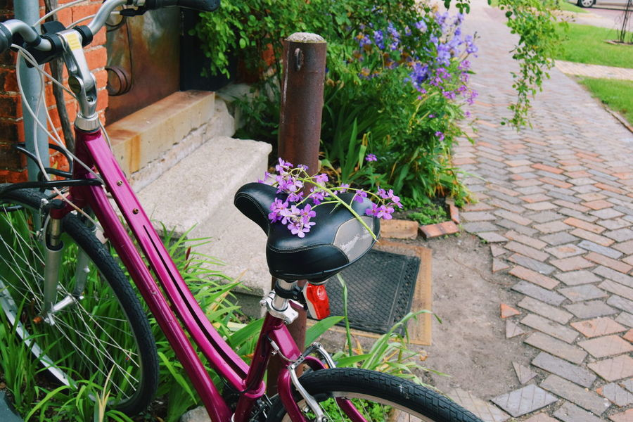 Bikes Purple Flowers Purple Flowers Boho Antique Wallpapers Cute Wallpapers Flower Bicycle Outdoors Plant Day High Angle View Front Or Back Yard Land Vehicle Nature No People Pedal Colour Your Horizn The Still Life Photographer - 2018 EyeEm Awards A New Beginning