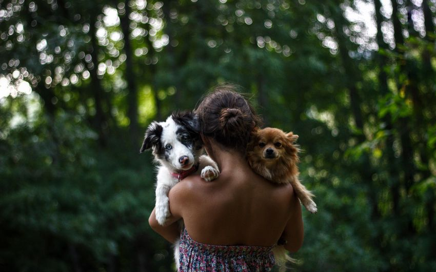 Rear view of woman carrying dogs in forest