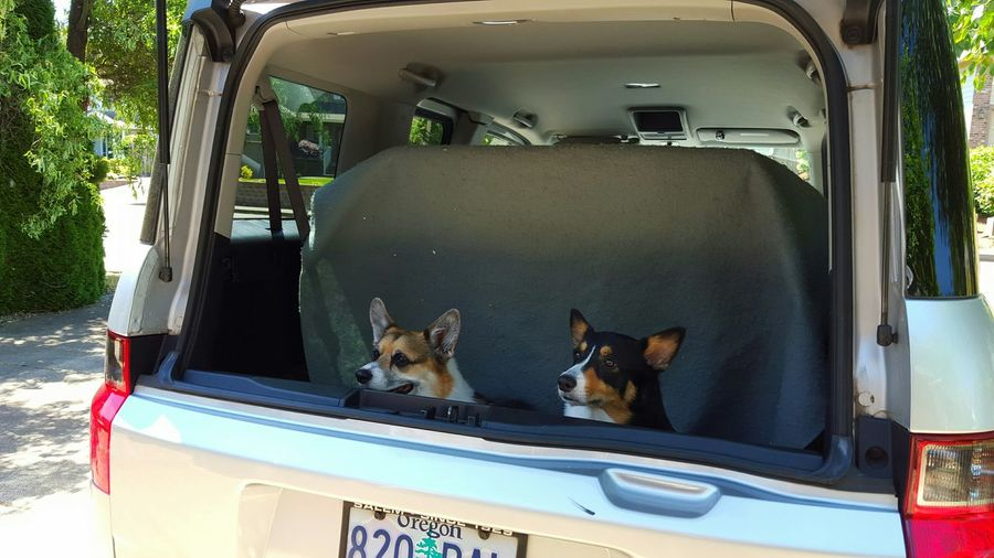 Pets Corner The Adventure Handbook Corgis Going Out Dogs In Cars Dogs Pets Animals Summer Dogs Summer Views Capture The Moment