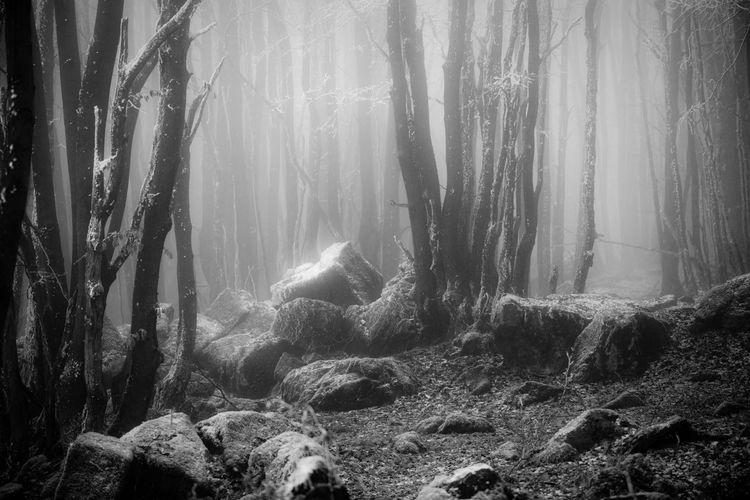 Blackandwhite Black And White Fog Foggy Trees Nature Monochrome Weather Fairytale