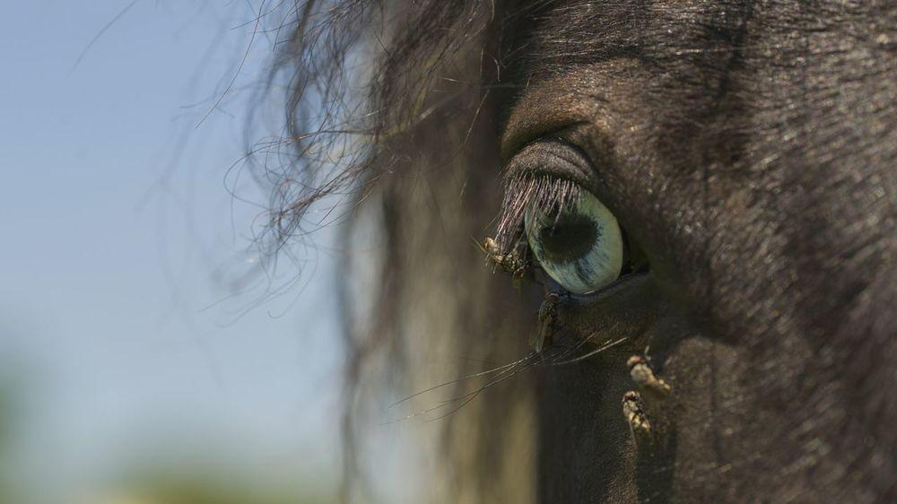 EyeEm Selects One Animal Animal Wildlife Portrait Looking At Camera Close-up Nature Animal Themes Outdoors No People Horse Horse Photography  Horse Eye Macro Eye Fly Flies The Week On EyeEm
