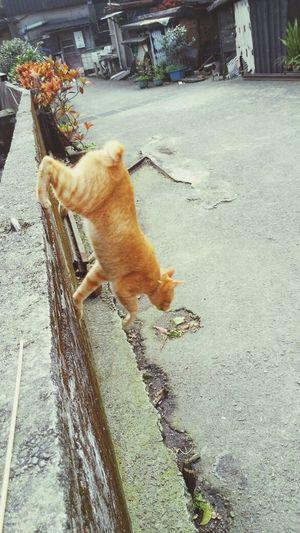 飛簷走壁 Cats Cute Pets Cute Cats Padfone Infinity