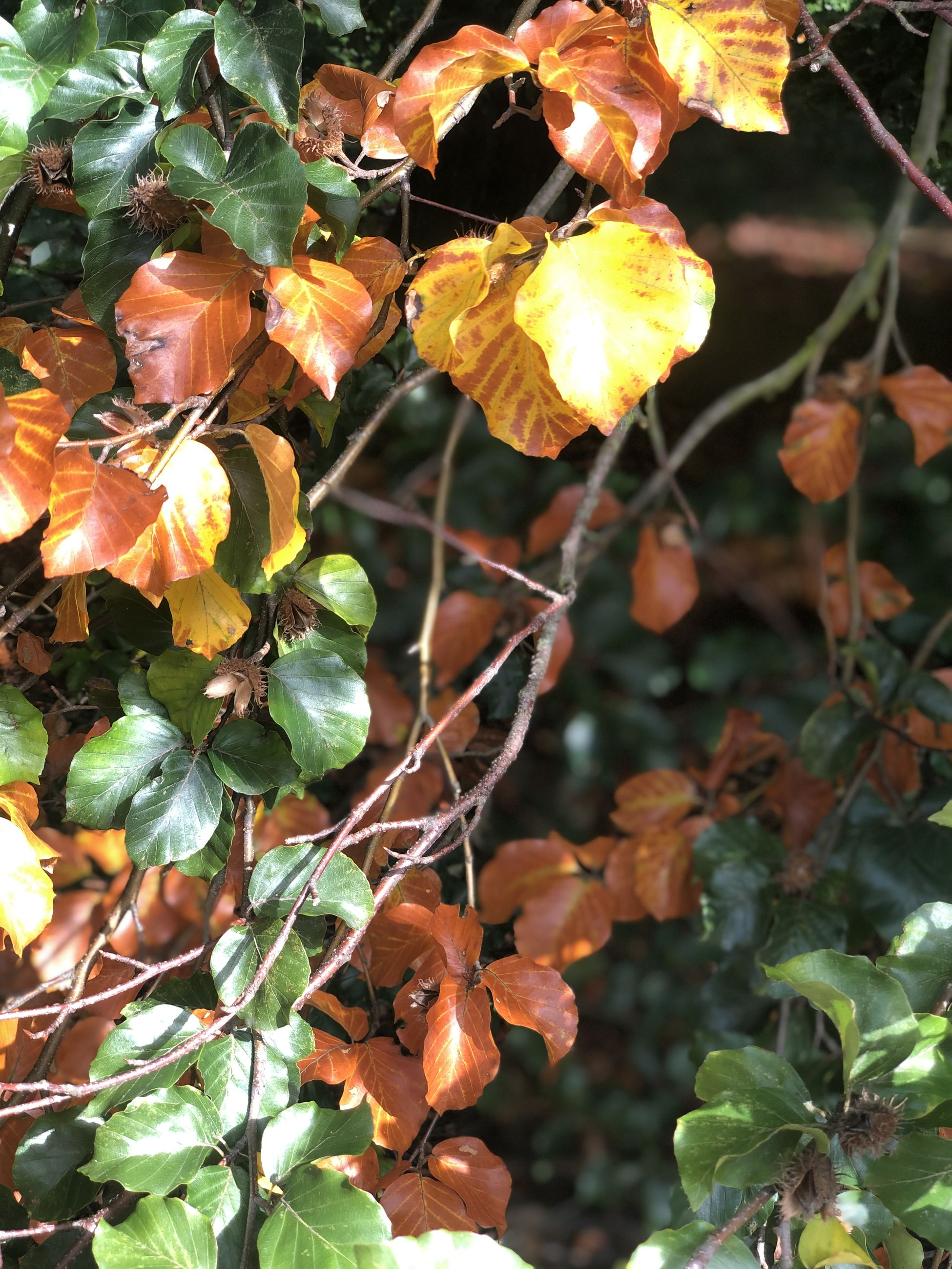 growth, plant, plant part, leaf, nature, beauty in nature, close-up, no people, day, orange color, freshness, fruit, food, focus on foreground, tree, food and drink, healthy eating, vulnerability, outdoors, fragility, change, leaves