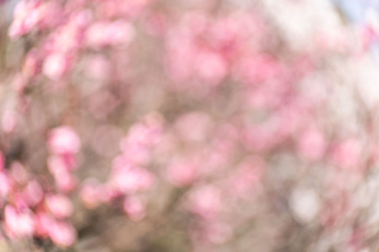 Background Pink Color Backgrounds Freshness Nature Flower Plant Abstract Defocused Springtime Pattern Abstract Backgrounds Softness