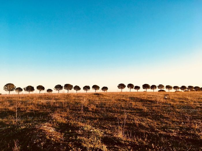 Tree Clear Sky Landscape No People Nature Outdoors Sky Day Beauty In Nature EyeEmNewHere