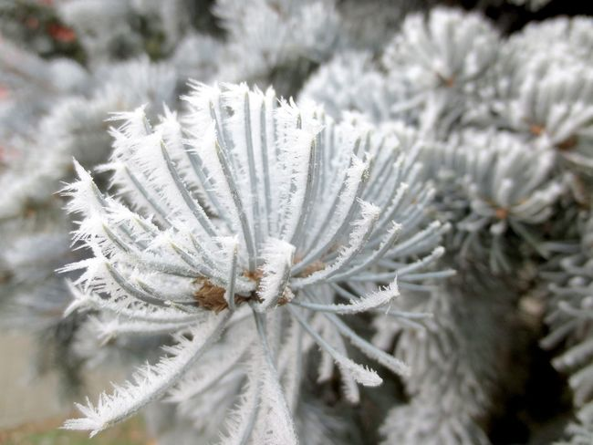 Beauty In Nature Close-up Cold Temperature Day Flower Fragility Freshness Growth Nature No People Outdoors Plant Snow Tree Winter