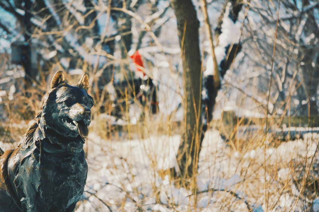 animal themes, nature, mammal, pets, no people, outdoors, domestic animals, day, tree
