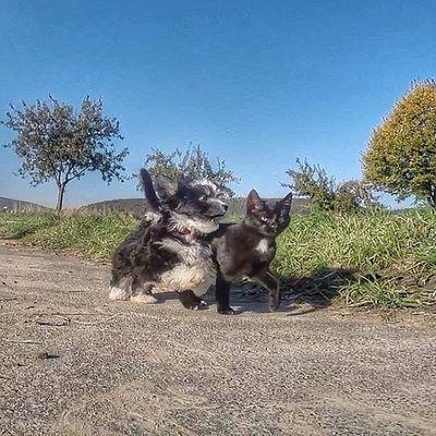 Havaneser Katze Holly Gassi Welpen