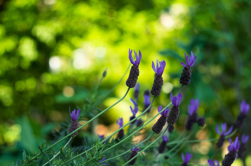 Beauty In Nature Close-up Day Flower Flower Collection Flowers Fragility Freshness Growth Nature No People Outdoors Plant Purple