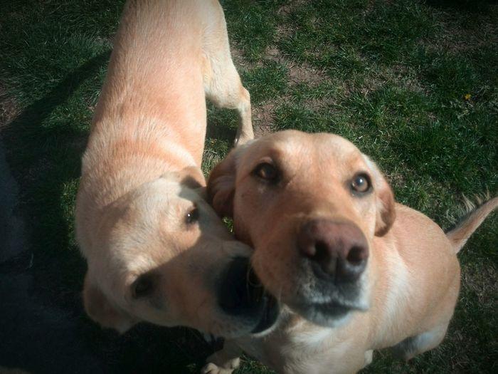 Animal Love Dogslove Vizbegovo Tvalfa Cuddletime