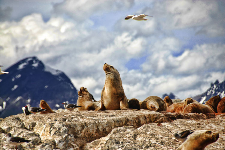 Seals on rock formation against cloudy sky