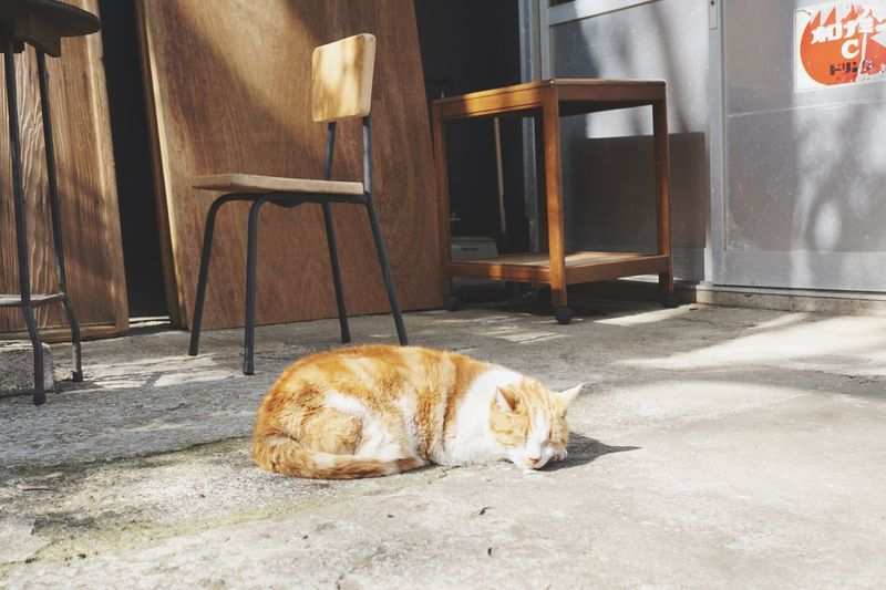 Light And Shadow Sunny Day Sweet Dreams Cats 🐱 One Animal Animal Themes Mammal Pets Domestic Animals No People