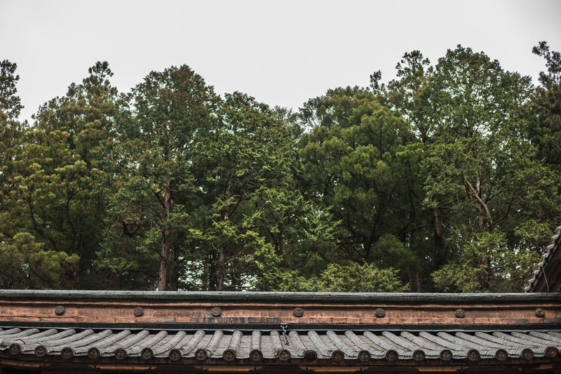A temple roof in Nikko ASIA Architecture Japan Japanese  Shrine Travel Trees Beauty In Nature Day Forest Green Green Color Growth Nature No People Outdoors Plant Railing Roof Shindles Sky Travel Tree
