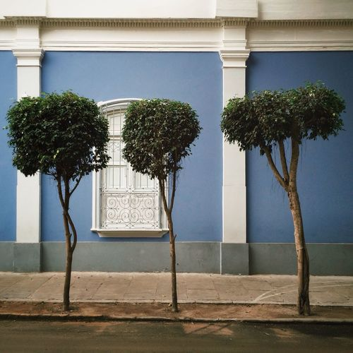 Trees In Front Of Building