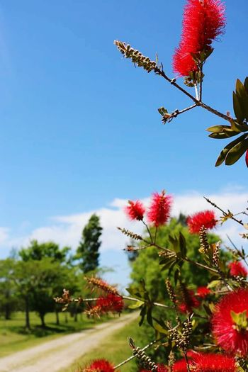 Hay que saber mirar... Tree Flower Nature Sky Plant No People Beauty In Nature Fragility Day Freshness Red Flower Crecer Camino Follow Paz ✌