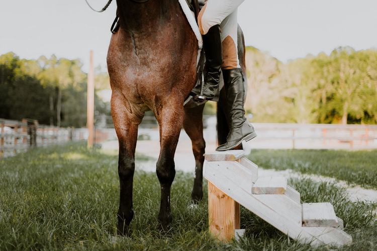 Low section of person riding horse on grassy field
