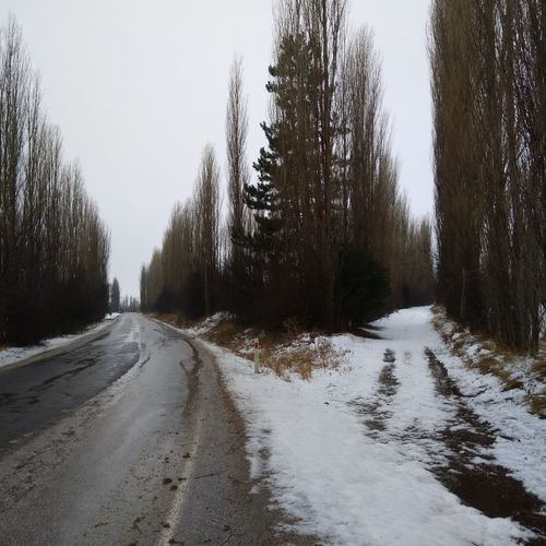 Snow covered roads amidst trees against clear sky
