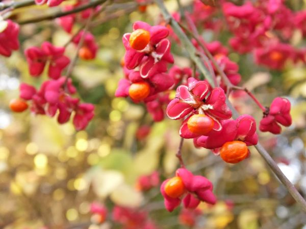 Beauty In Nature Nature Pink Flower Orange Forest Flowers Colorful Blossoming