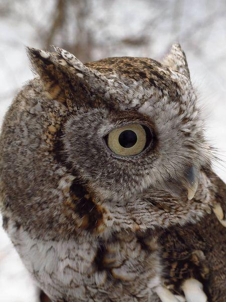 Nature_collection Nature EyeEm Best Shots EyeEmBestPics Eye4photography  Owl Birds EyeEm Best Shots - Macro / Up Close EyeEm Nature Lover
