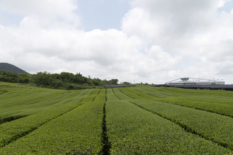 landscape of green tea field at Osulloc in Jeju Isand, South Korea Agriculture Beauty In Nature Cloud - Sky Crop  Day Farm Field Freshness Green Color Green Tea Field Growth JEJU ISLAND  Landscape Nature No People Osulloc Outdoors Rural Scene Scenics Sky Tea Crop Tranquil Scene Tranquility