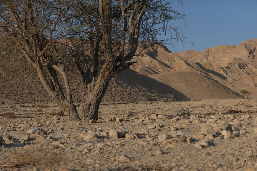Israel Negev  Tree Land Plant Nature Sky Tranquility No People Beauty In Nature Day Sunlight Scenics - Nature Landscape Sand Environment Tranquil Scene Desert Outdoors Non-urban Scene Clear Sky