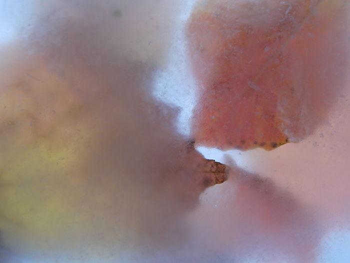 Autumn Leaves Backlit Backlit Ice Backlit Leaves Close-up Frozen Leaves Frozen Nature Ice