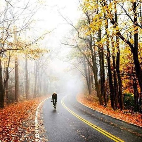 Autumn🚴🍁🍄🌳🍁🌰☔⛅ Autumnleaves Autumn Cycling Fog Cyclinglife Autumncolors Bike Cycle Love Instaautumn Lovely Cyclist Instalike Instagood Picoftheday Photograph Photooftheday