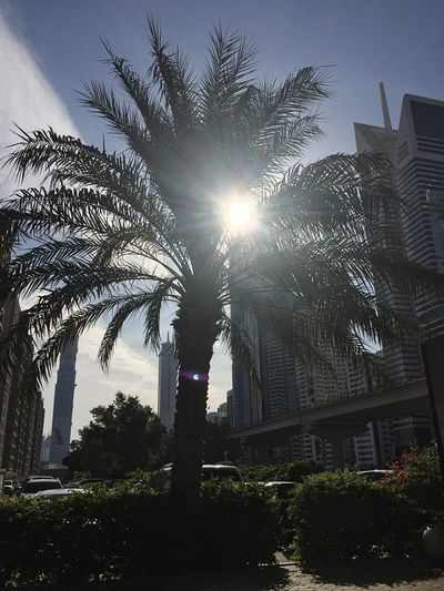 Palm Tree Built Structure Sunlight No People Growth Sunbeam Nature Taking Photos City Dubai Shaikh Zayed Road