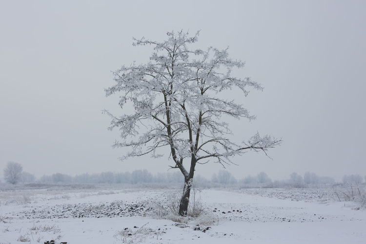 White tree Winter Cold Temperature Snow Tree Beauty In Nature Tranquility Plant Landscape Land Scenics - Nature Environment Tranquil Scene Sky Non-urban Scene Bare Tree Clear Sky No People Covering Field Cold Isolated Outdoors Extreme Weather Snowing