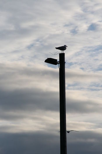 Animals In The Wild Bird Cloud - Sky Day Floodlight Lighting Equipment Low Angle View No People Outdoors Perching Seagulls Sky Adapted To The City The Secret Spaces This Is Strength