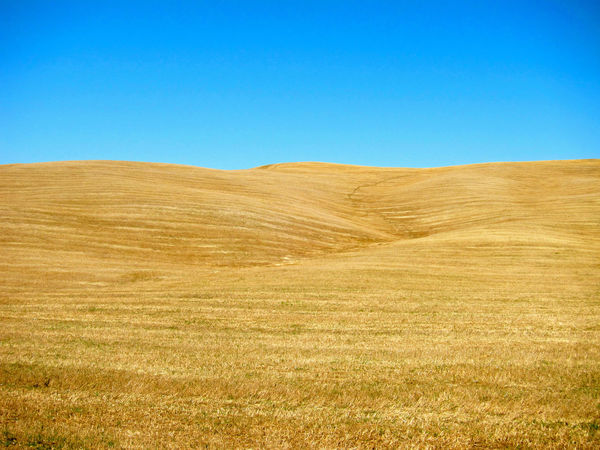 Montalcino. Toscana Beauty In Nature Blue Clear Sky Copy Space Day Field Grass Landscape Nature No People Outdoors Rural Scene Scenics Summer