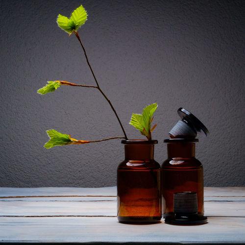 Alive  Botany Bottled Tree Close Up Foliage Living Living Trees Nature No People Plant Spring Springtime Sustainable Sustainable Living Tree Trees Urban Landscape Urban Life Vegetation Vintage Vintage Bottles