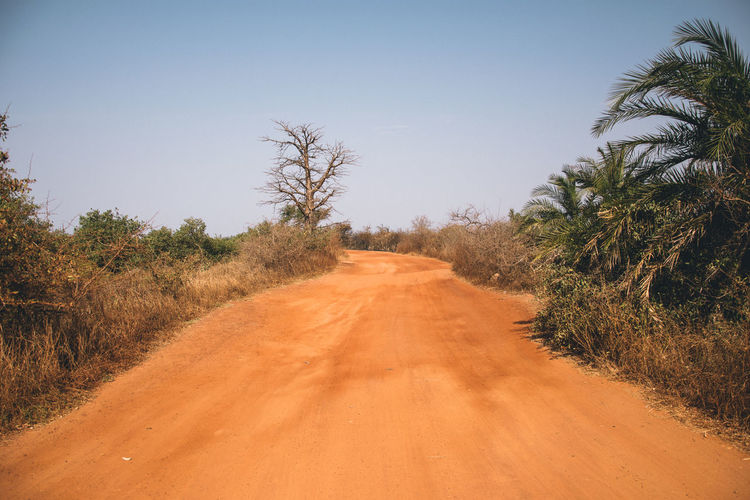 Africa Tree Plant Direction The Way Forward Road Sky Landscape Transportation Environment Nature No People Dirt Road Land Tranquil Scene Scenics - Nature Tranquility Dirt Day Diminishing Perspective Clear Sky Outdoors Semi-arid Arid Climate