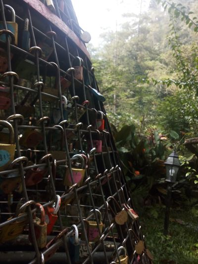 Love Close-up Day Field Focus On Foreground Forest Growth Hanging Land Love Lock Love Locks Metal Mode Of Transportation Nature No People Outdoors Plant Plant Part Religion Sunlight Transportation Tree