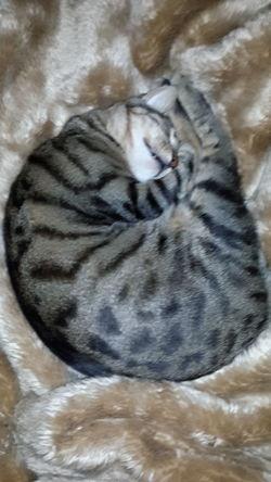 Cat Cat Lovers Cat♡ EyeEm_crew