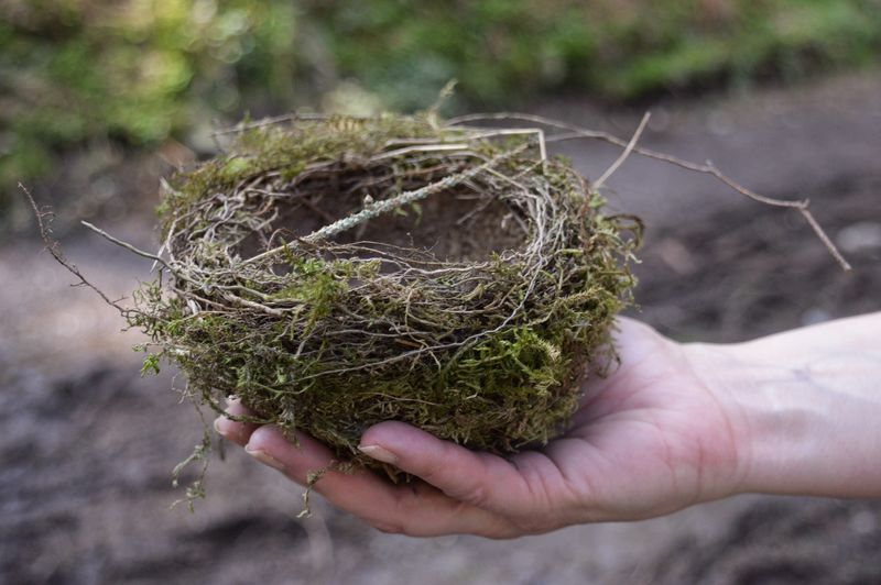 Cropped Hand Of Woman Holding Bird Nest