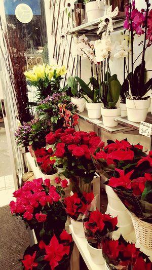 Fleurs Flowers Enjoying Life Paris ❤ Capture The Moment Sapin De Noël Noel2015