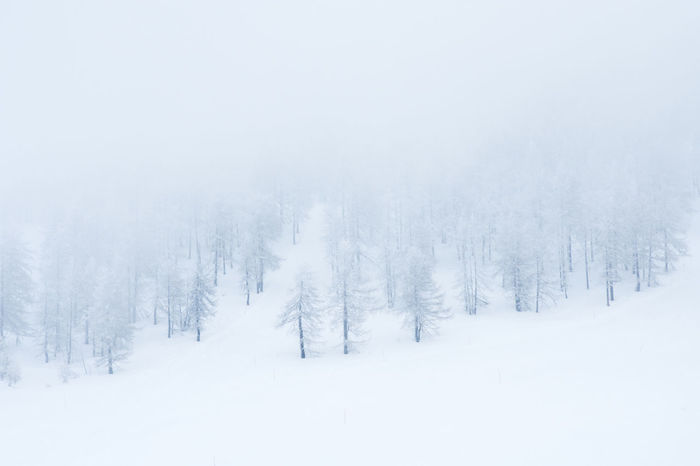 Frezee tree Pine Tree Tree Tree_collection  Cold Temperature Landscape Mountain Cold Mountain Cold Place Winter Cold Weather Cold Days Tree Trees Pine Tree Fog Foggy Foggy Day Snow ❄ Snow Snow Covered
